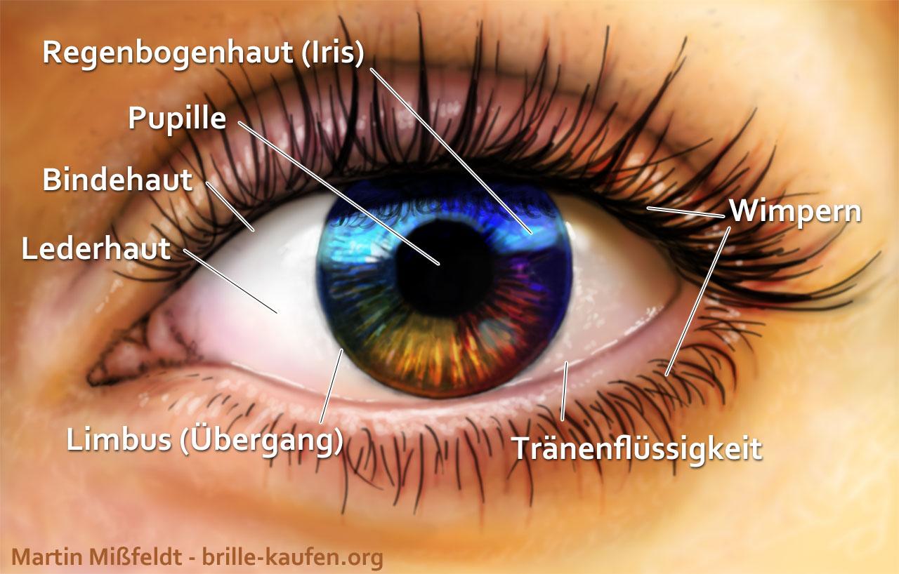 Augen beschreiben